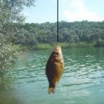 Рыбалка на робочий стол